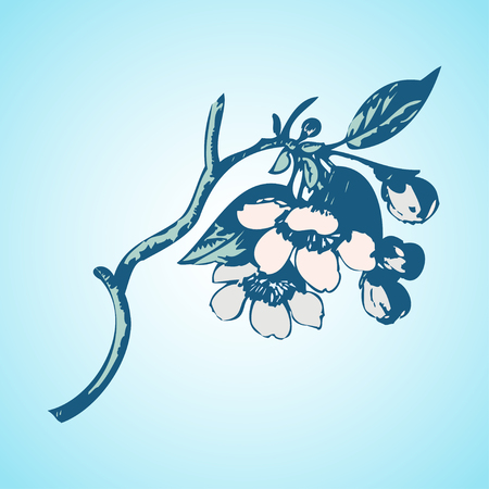 japanese culture: Cherry branches with flowers, sakura vector illustration