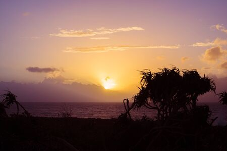 seaside resort: The silhouette of the sea to the beautiful sunsets and plants Stock Photo
