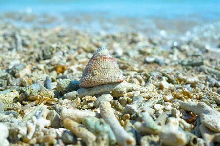 作品や沖縄のビーチのサンゴの殻 写真素材