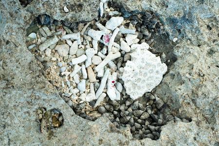 作品やサンゴの殻の沖縄海岸
