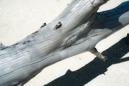 tropica: Driftwood that washed ashore on the white sand of the coast of Okinawa
