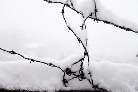 Barbed wire covered by snow in a winter day