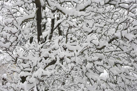 Winter landscape: Snowy tree Stock Photo