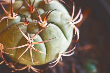 cactus close up Stock Photo