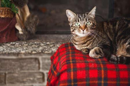 a winter cat