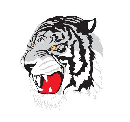 tiger tattoo - vector Illustration