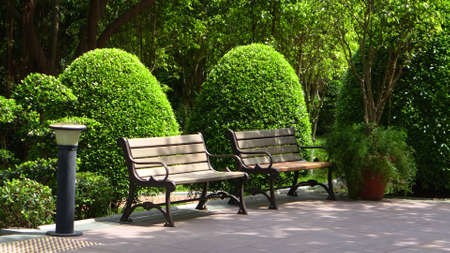 formal garden: Green plants and benches in formal garden