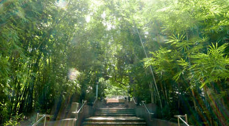 chinese bamboo: Green Chinese bamboo forest with sunlight flare