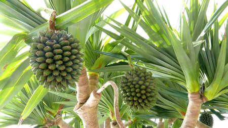 arboles frutales: Árboles verdes de la fruta en el bosque