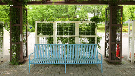 ourdoor: Blue benches, green plants around the frame in the public park