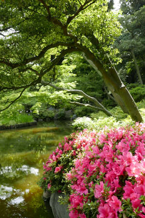 Vertical green plants and pink flower in the japan private zen stock photo vertical green plants and pink flower in the japan private zen park mightylinksfo
