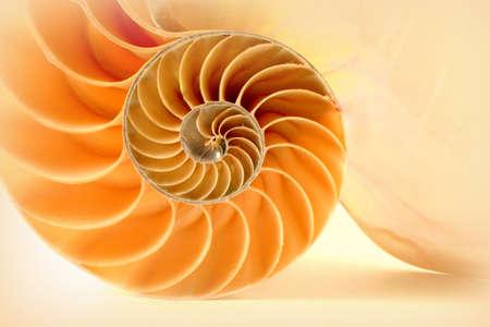 lamellar: Nautilus Stock Photo