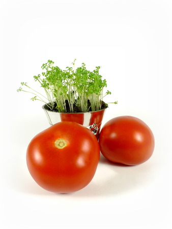 cress: tomatoes with cress