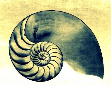 lamellar: nautilus pattern