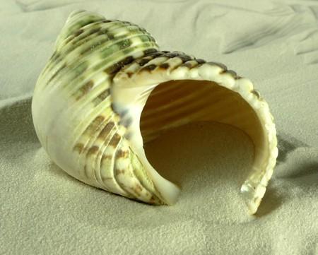 babosa: babosa de mar ??