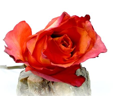 soapstone: red rose Stock Photo