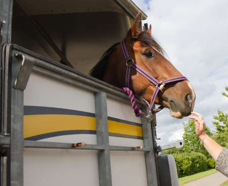 Saying goodbye as horse leaves in trailer.