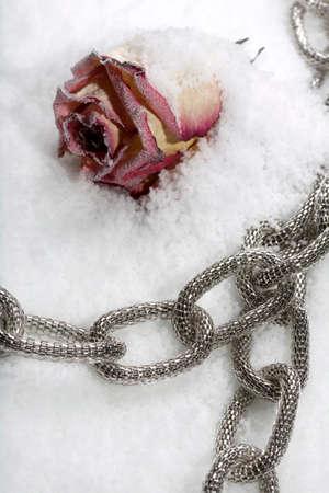 costume jewellery: Costume jewellery and rose on ice in studio Stock Photo