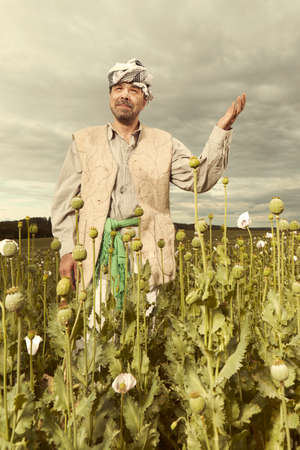 Illegal farmer harvesting raw opium on large poppy field