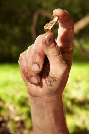prospector: Detalle de las pepitas de oro encontradas por el prospector de hoy en la arena del arroyo