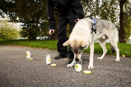 cognicion: Identificación de huellas de olor por perro policía en la ubicación del parque al aire libre.