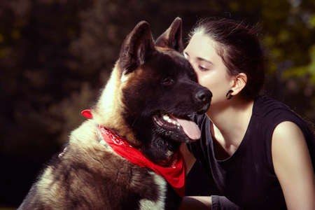 Young male puppy of American Akita dog with his owner Stock Photo