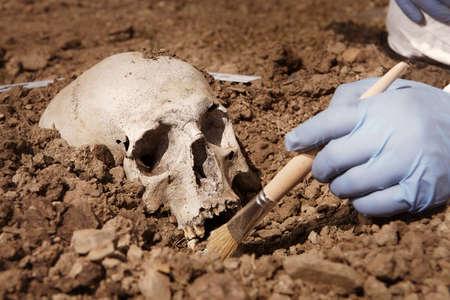 Crime scene investigation - human skull found on plain construction yard during work