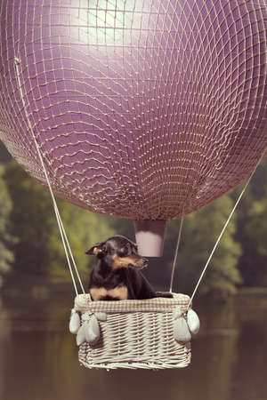 Ratter dog female enjoying balloon in air and playing by lake