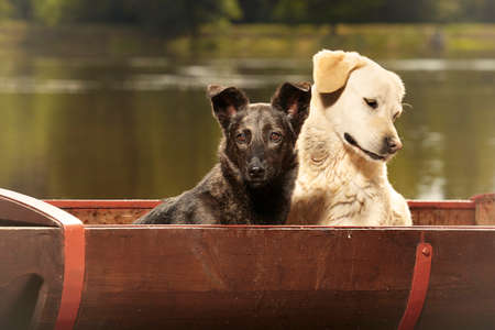 Couple of nice two dogs posing in washtub by lake Stock Photo