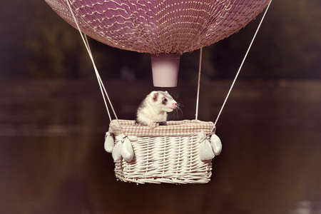 Ferret in air flying in balloon in front of lake