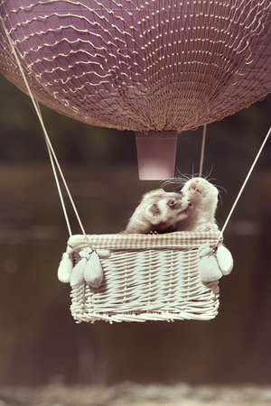 Ferret couple in air flying in balloon in front of lake