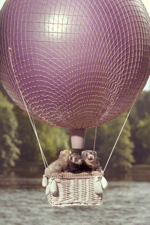 Ferret group in air flying in balloon in front of lake