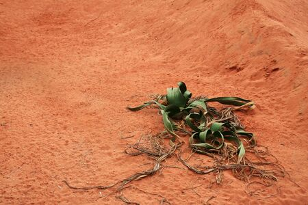 Sand and a plant.  Reklamní fotografie