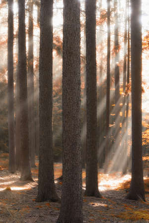 autumn forest scene with sunrays shining through branches  Stock Photo - 6070667