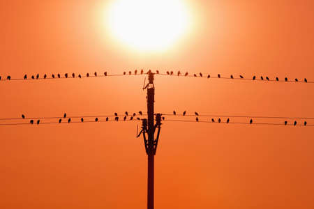birds sitting on wires in sunset Stock Photo - 7785426