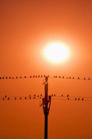 birds sitting on wires in sunset Stock Photo - 7785425