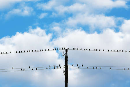birds sitting on electricity wires - blue sky and white clouds Stock Photo - 7785450
