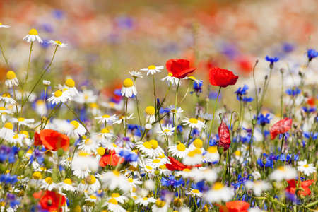 abundance of blooming wild flowers on the meadow at spring time photo