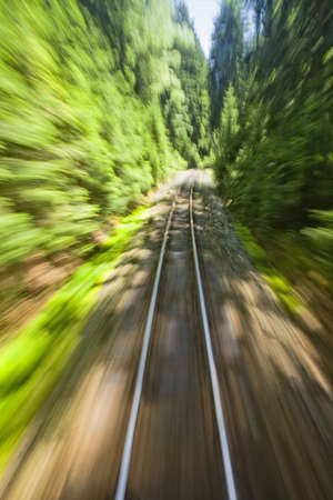 forest railroad: View of narrow gauge railroad track from rear window of train riding through forest
