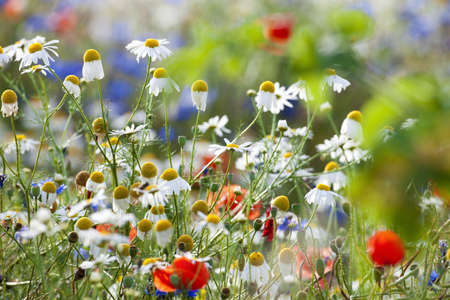 abundance of blooming wild flowers in the garden at spring time photo