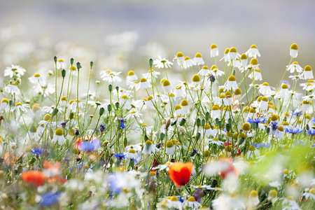 abundance of blooming wild flowers on the meadow at springtime photo
