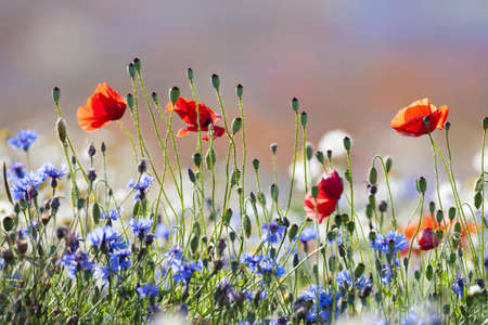 abundance of blooming wild flowers on the meadow at springtime Standard-Bild