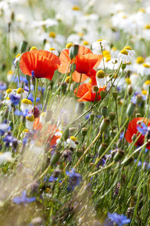 abundance of blooming wild flowers on the meadow at springtime Stock Photo - 13110989