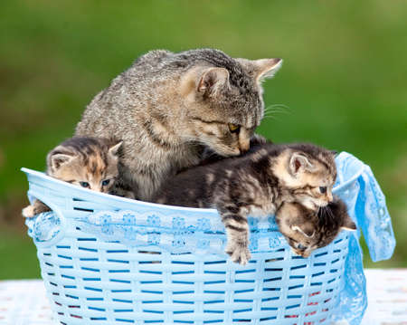 pussy: Cat and her Kittens Lying in a Basket Outdoors