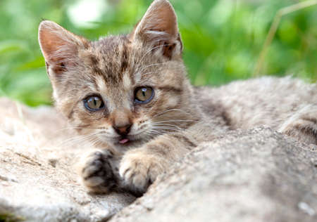 Closeup of a Kittens Lying Outdoors