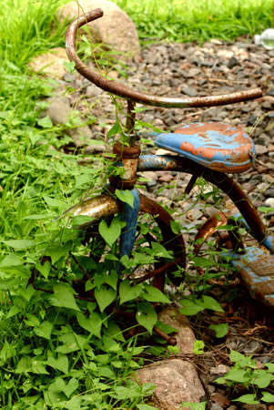 antique tricycle: Rusty Bike with Vine