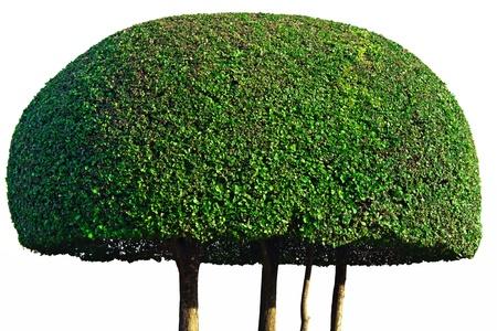 woodland sculpture: Shrub