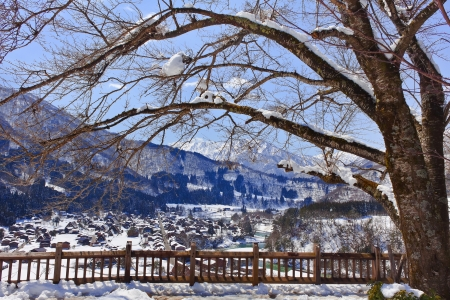 Sakura Tree at the Shiroyama Viewpoint at Gassho-zukuri Village Shirakawago photo