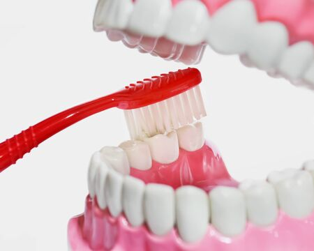 Closeup of plastic teeth and gum model and toothbrush Stock Photo