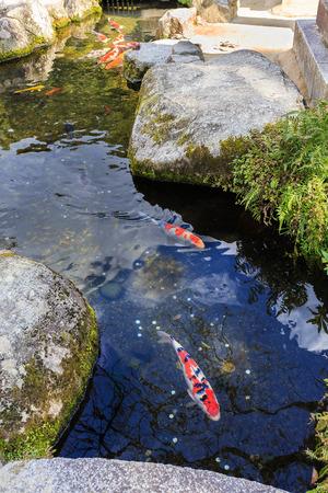 pices: Fancy carps in a pond iside Dazaifu Tenmangu